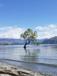 DER Wanaka Baum, in gutem Licht